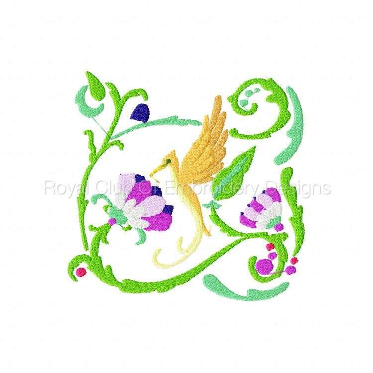 2rsjacobeantropicalbirds_07.jpg