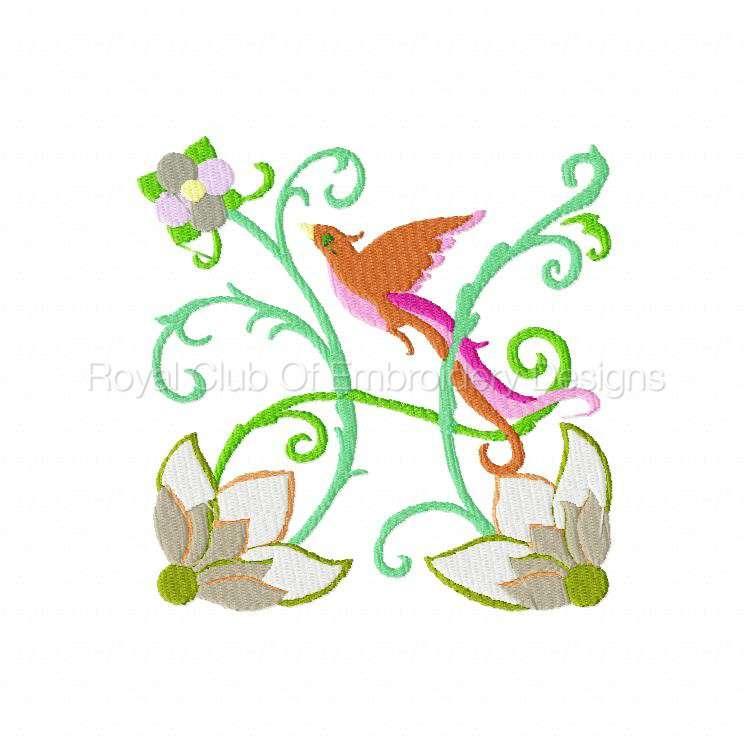 2rsjacobeantropicalbirds_09.jpg