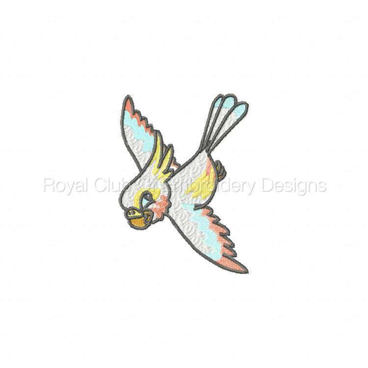 babyparrots_02.jpg