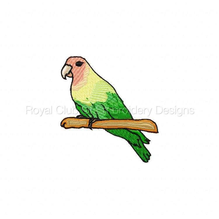 birdloversdelight_5.jpg