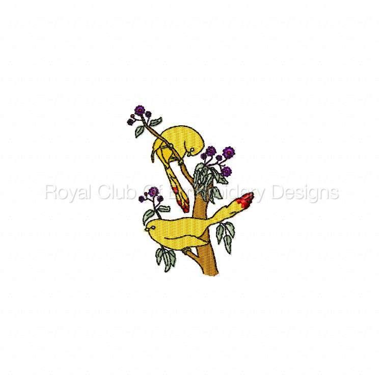 birdsandflowers_05.jpg