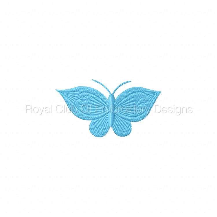 borderlessbutterflies_05.jpg