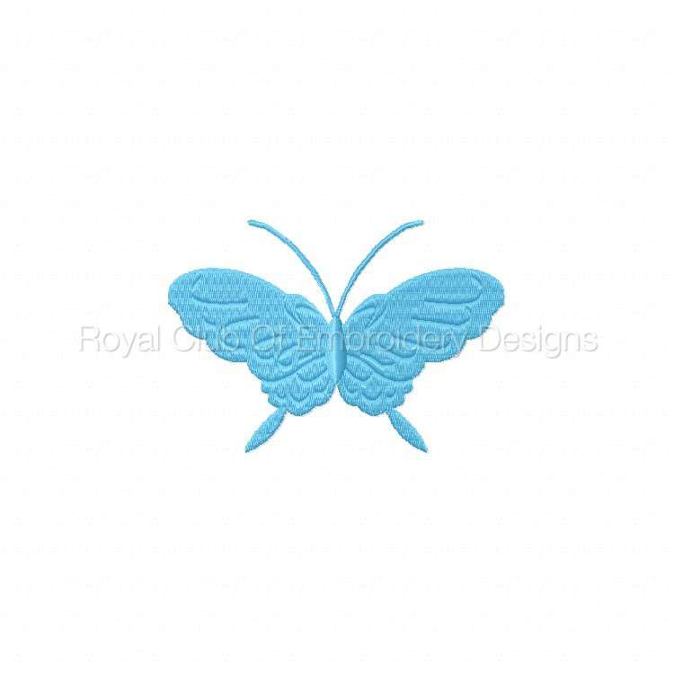 borderlessbutterflies_08.jpg