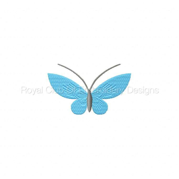 borderlessbutterflies_09.jpg