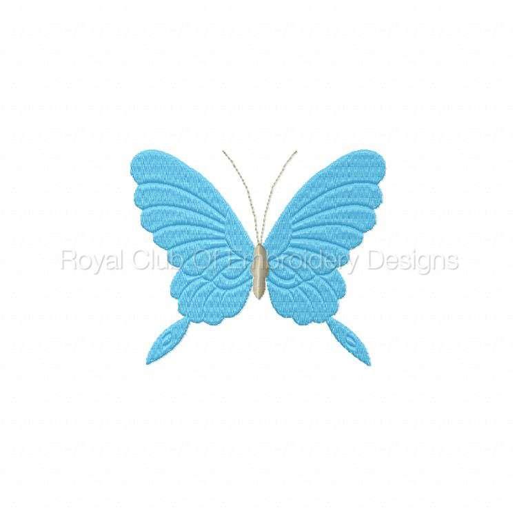 borderlessbutterflies_10.jpg