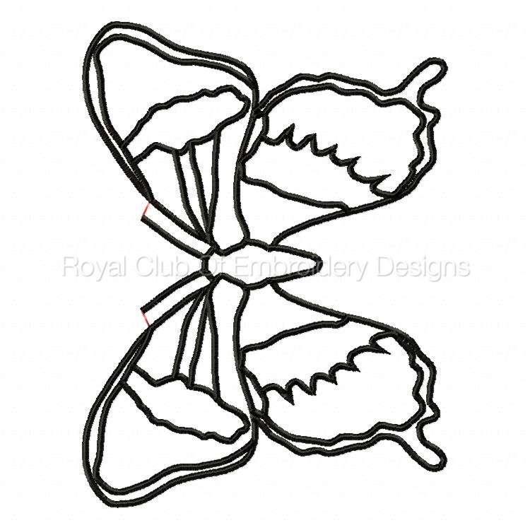 butterflys_2.jpg