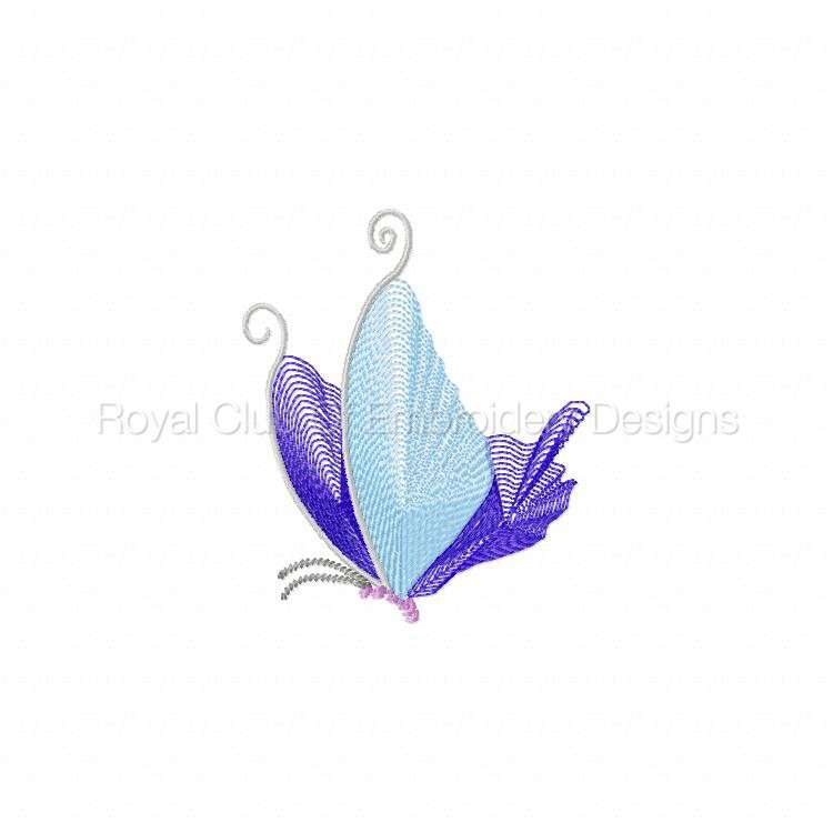 butterflythreads_17.jpg
