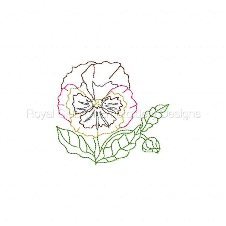 colorlinepansies_06.jpg