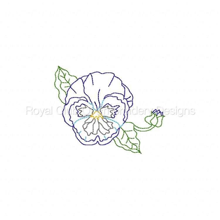 colorlinepansies_07.jpg