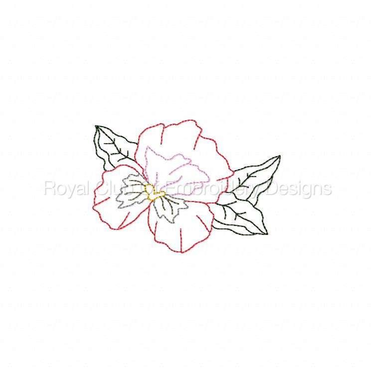 colorlinepansies_10.jpg