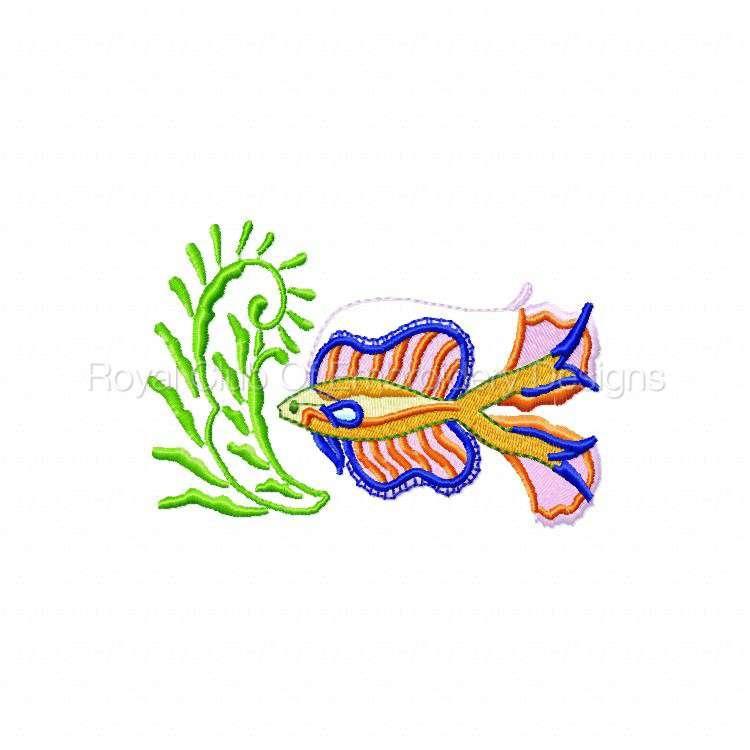 colortropicalfish_04.jpg