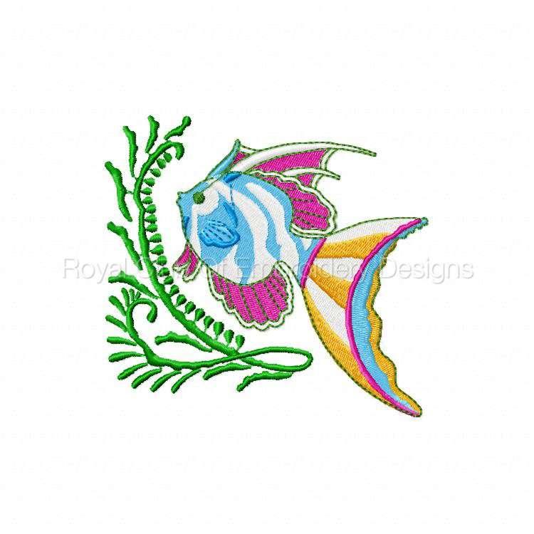 colortropicalfish_06.jpg