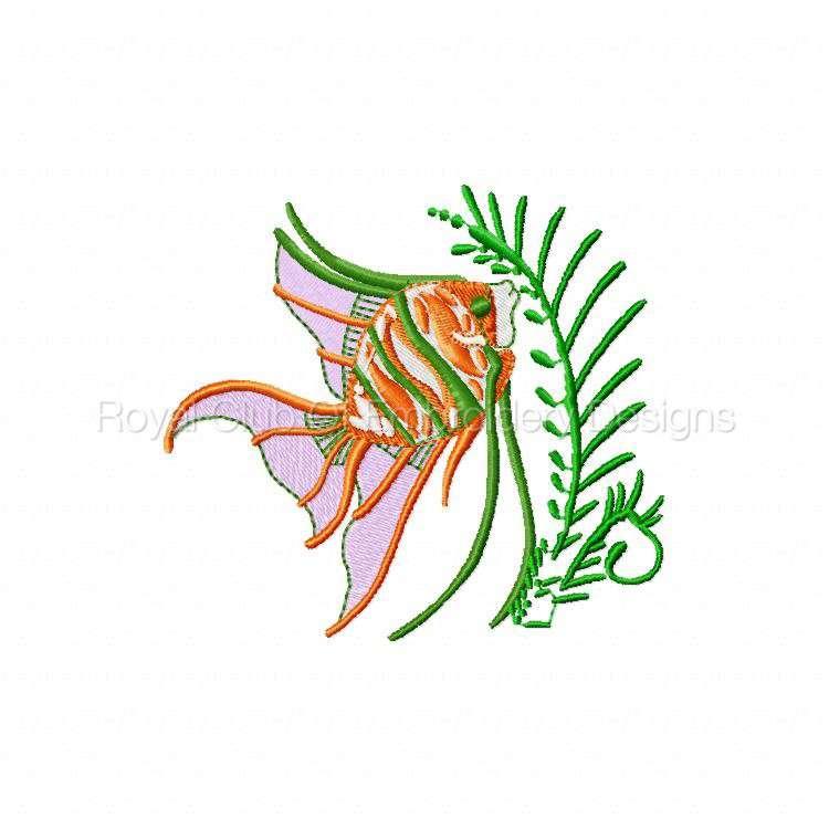 colortropicalfish_08.jpg