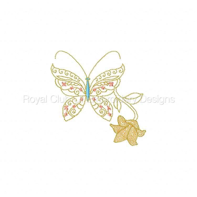 cwbutterflies_08.jpg