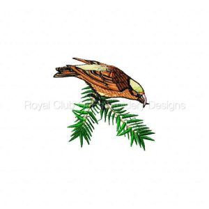 Royal Club Of Embroidery Designs - Machine Embroidery Patterns DD Birdy in my Backyard Set