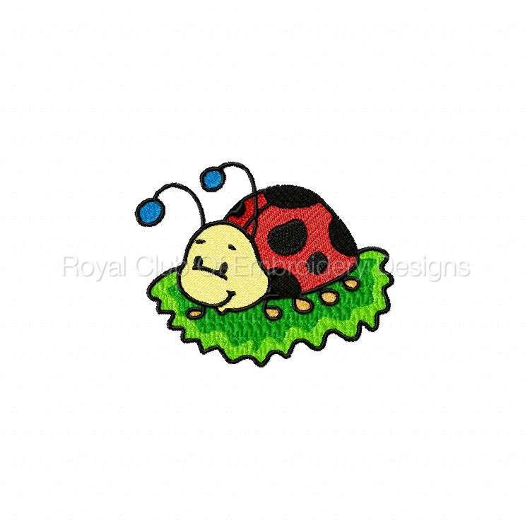 ddcoolladybugs_02.jpg