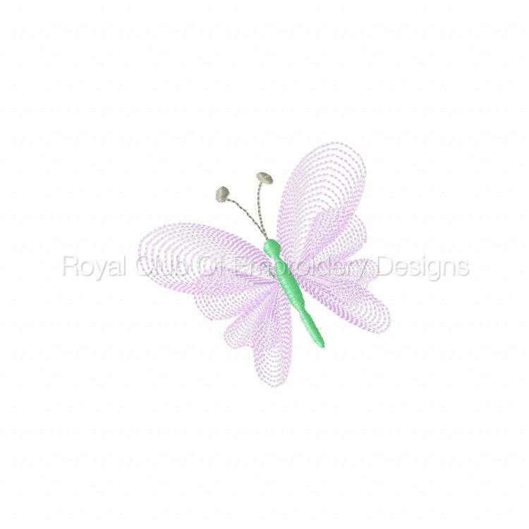 elegantlacybflies_01.jpg