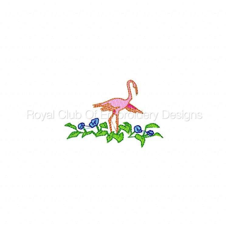 flamingos_06.jpg