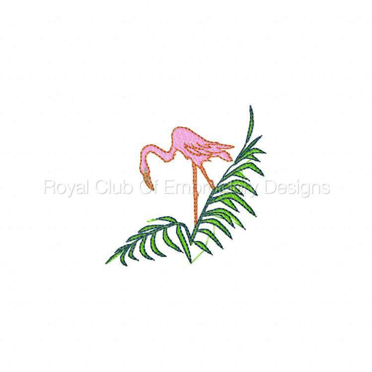 flamingos_09.jpg