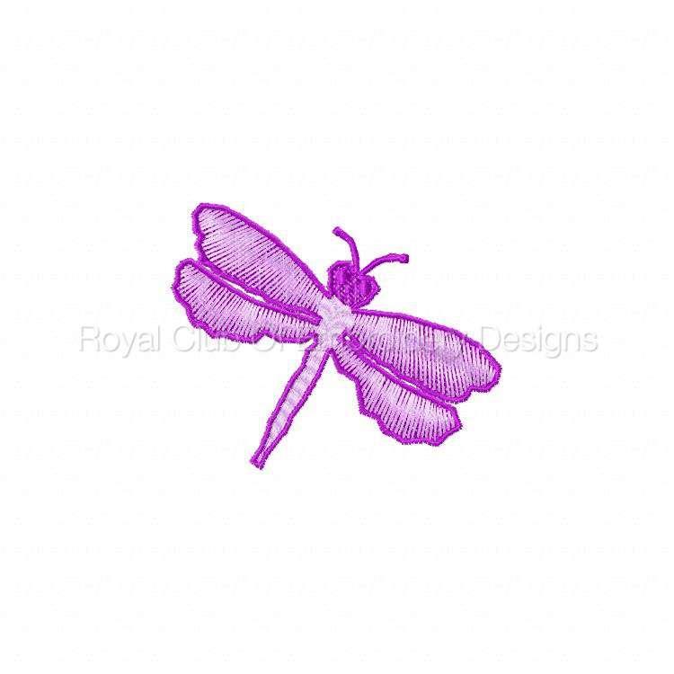 fsldragonflies_06.jpg