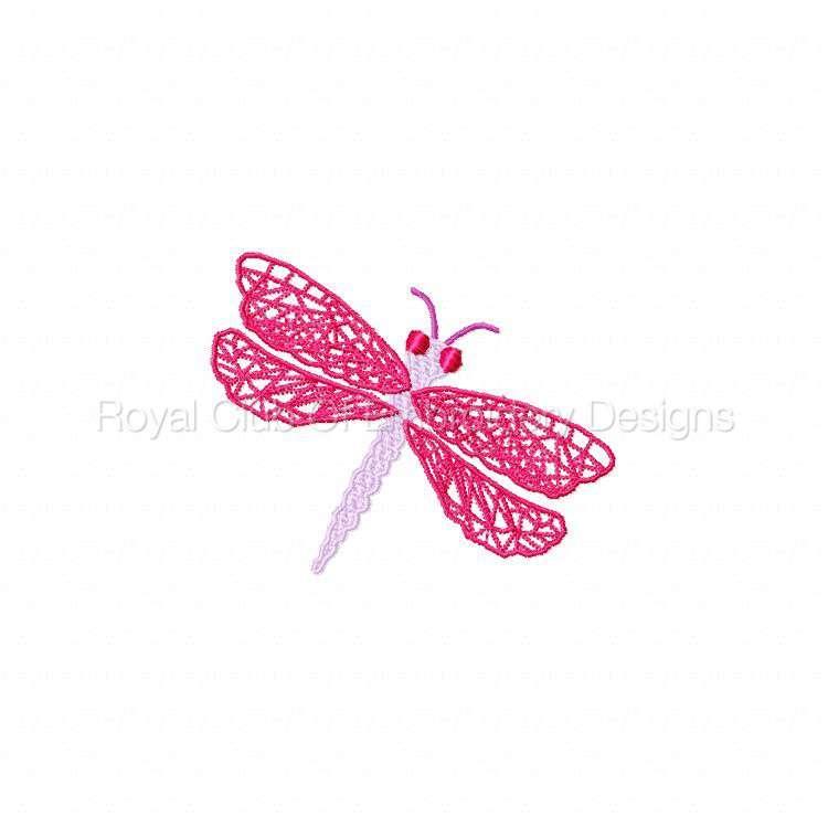 fsldragonflies_07.jpg
