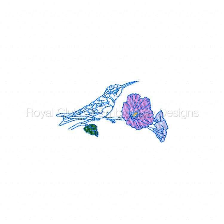 humbirdsnflowers_03.jpg