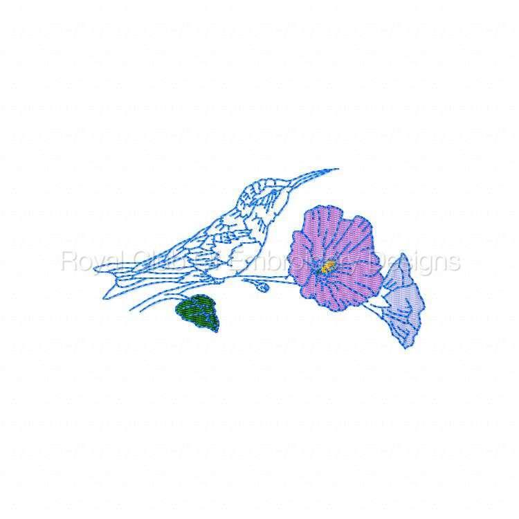 humbirdsnflowers_04.jpg