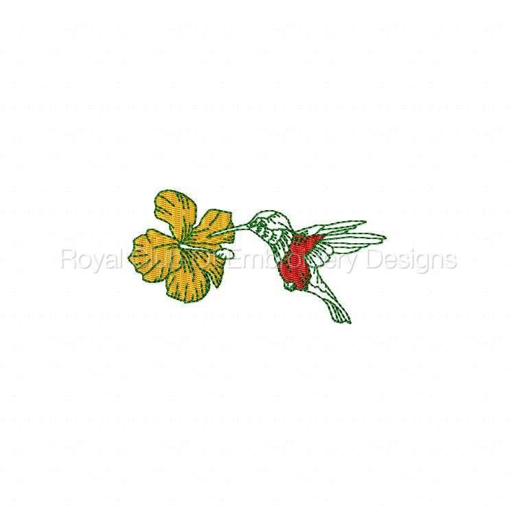 humbirdsnflowers_17.jpg