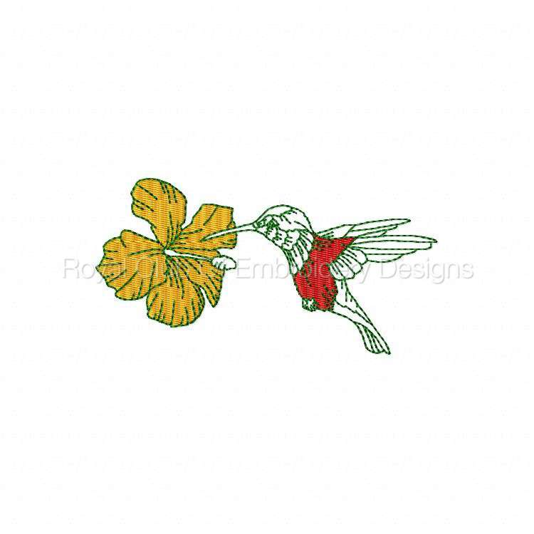 humbirdsnflowers_18.jpg