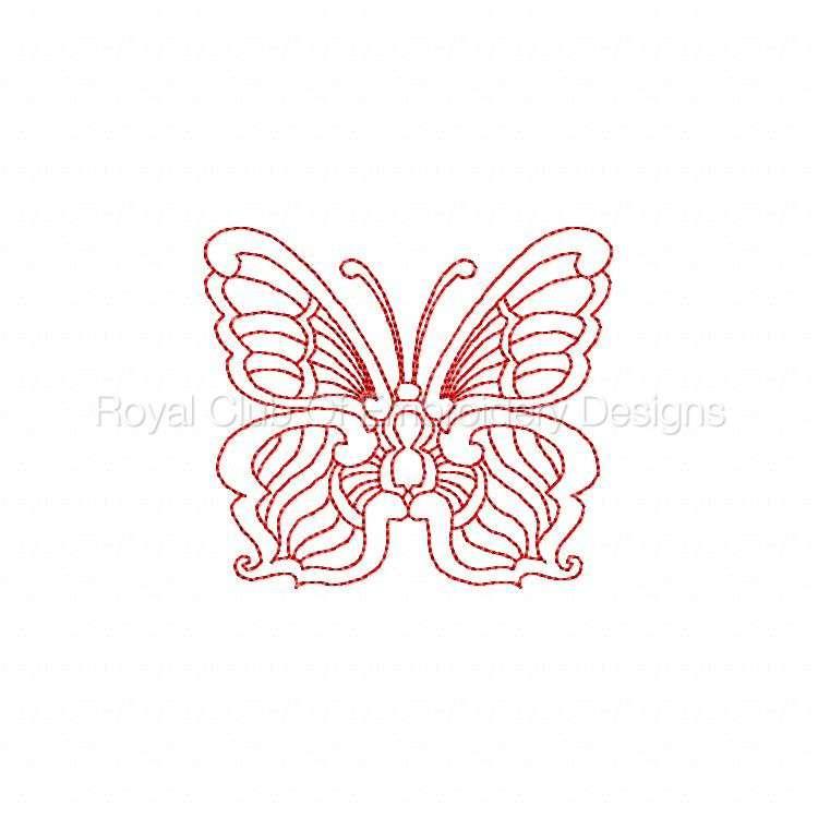 jnbutterflies2_16.jpg