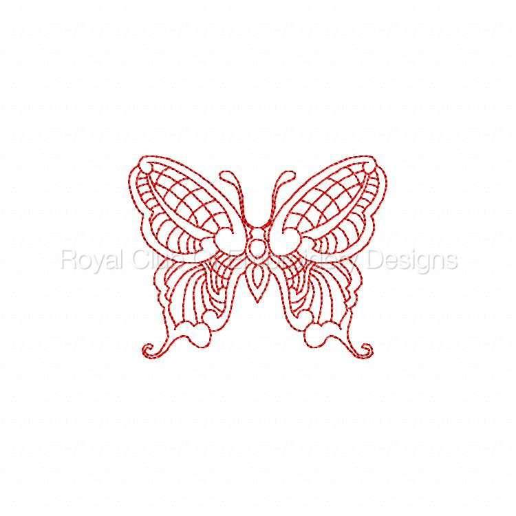 jnbutterflies2_22.jpg