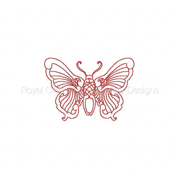 jnbutterflies2_25.jpg