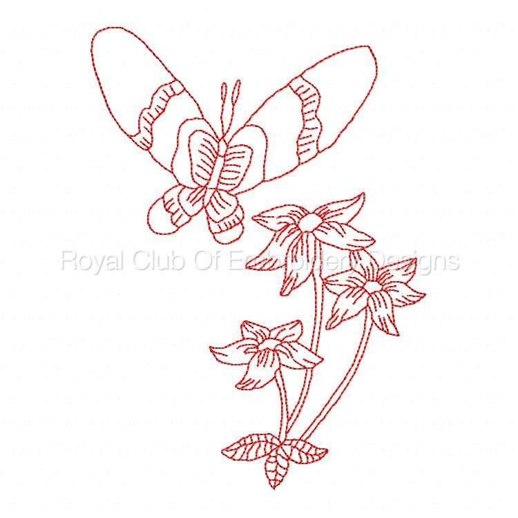 jnbutterflies_19.jpg