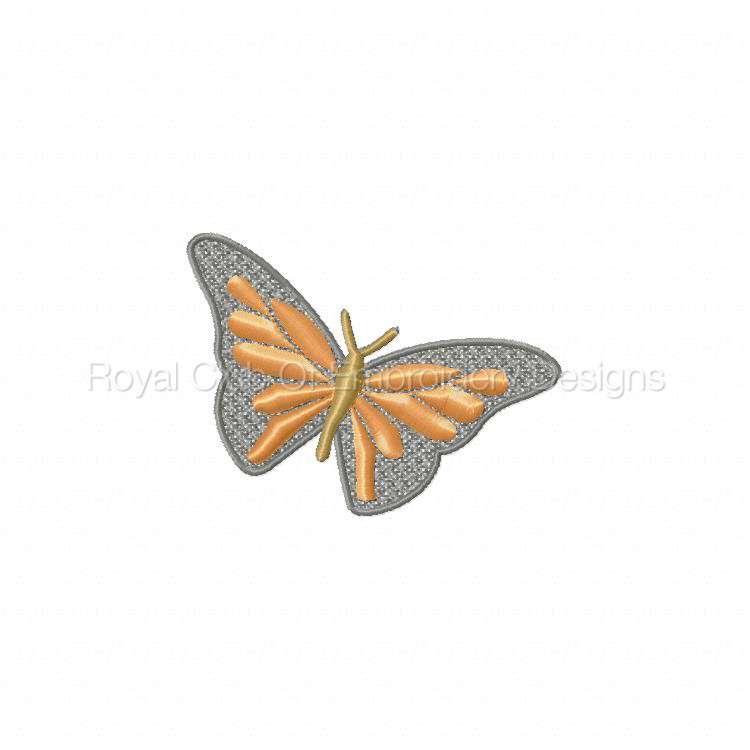 lacebutterfly_03.jpg
