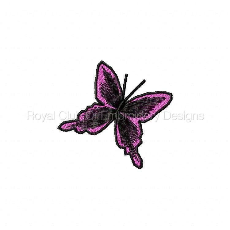 lacebutterfly_10.jpg
