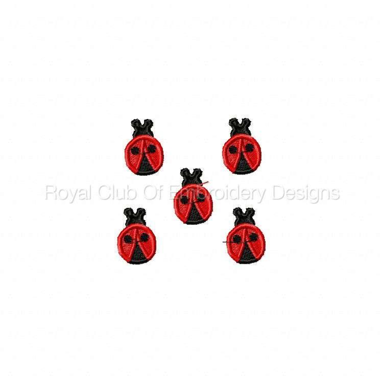 ladybug_10.jpg