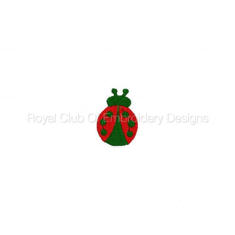 ladybug_11.jpg