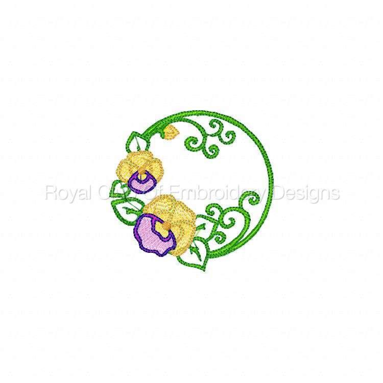 pansiescircles_03.jpg