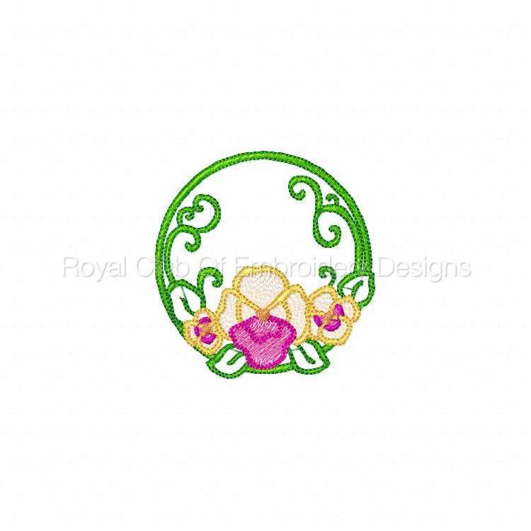 pansiescircles_08.jpg