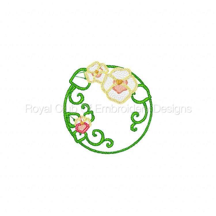 pansiescircles_09.jpg