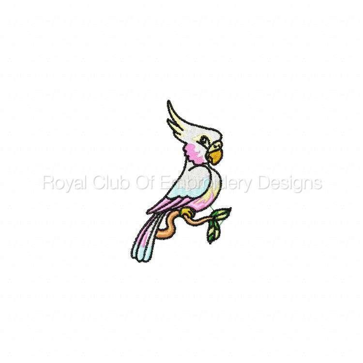 parrotpalooza_08.jpg