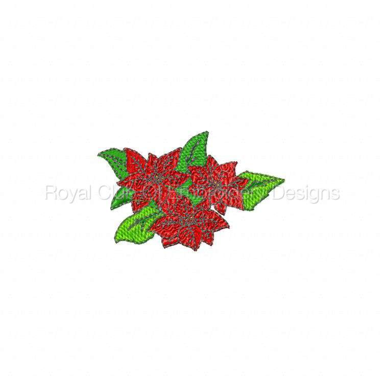 poinsettias_04.jpg
