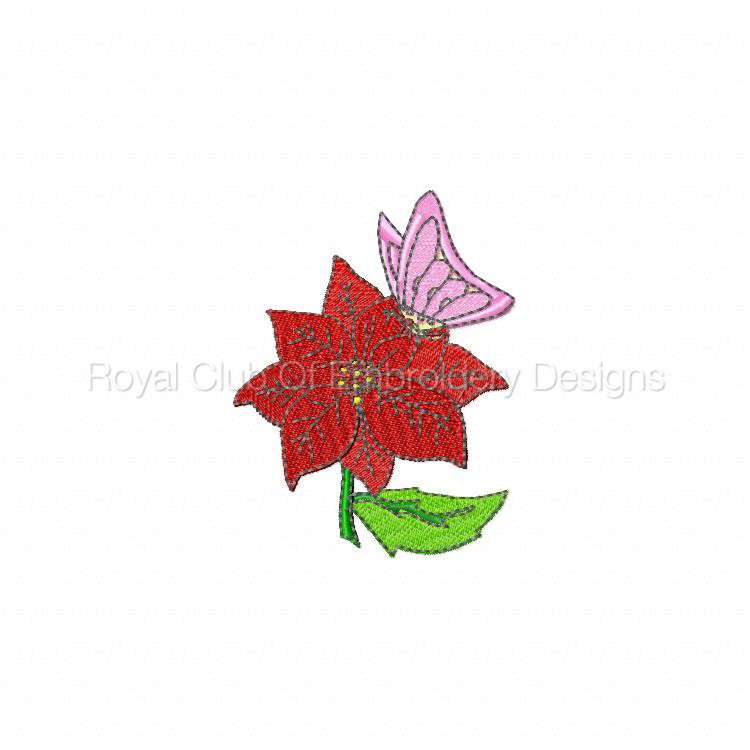 poinsettias_05.jpg