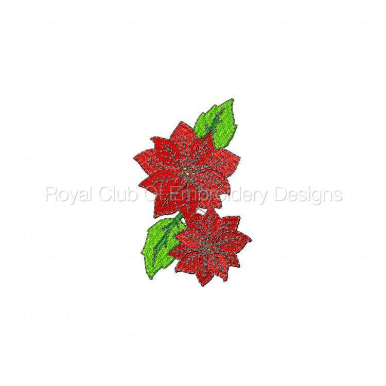 poinsettias_07.jpg