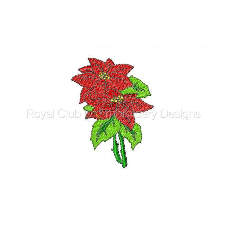 poinsettias_09.jpg