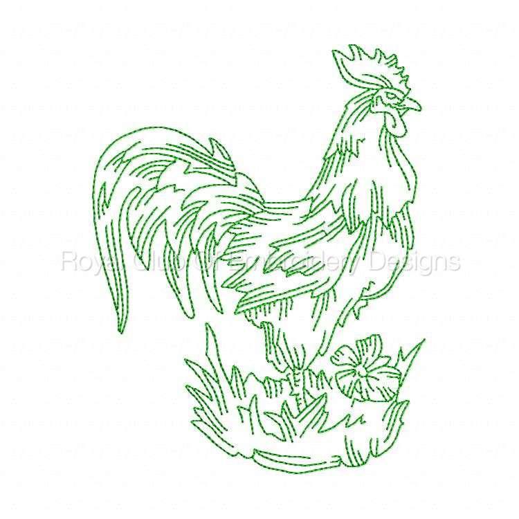 rooster_03.jpg