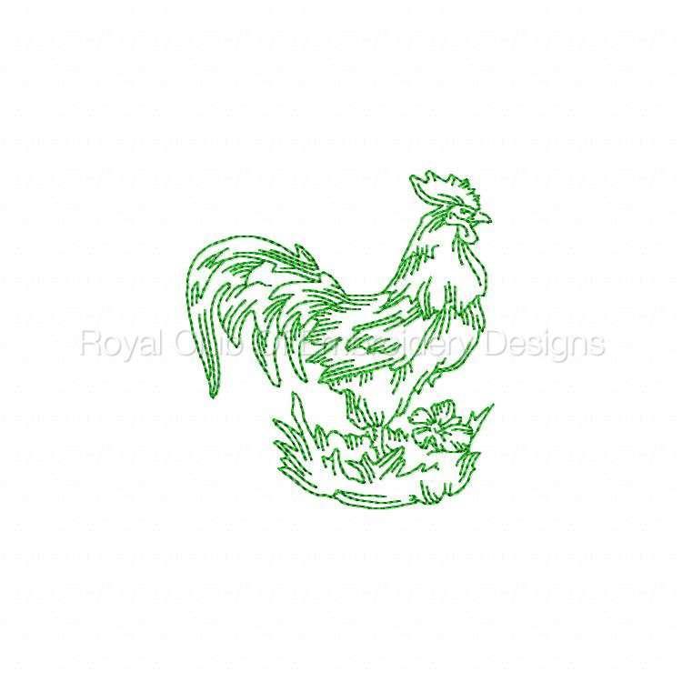 rooster_04.jpg