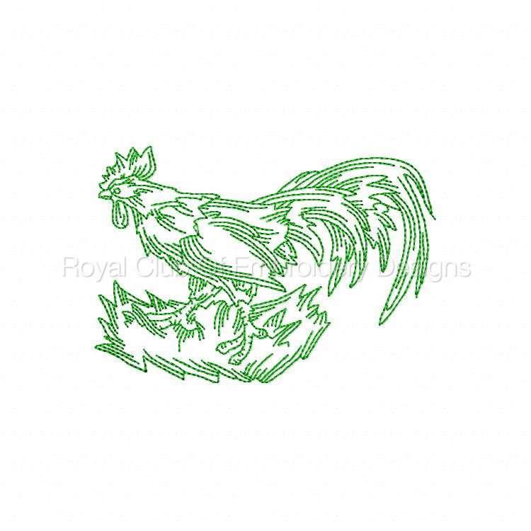 rooster_07.jpg