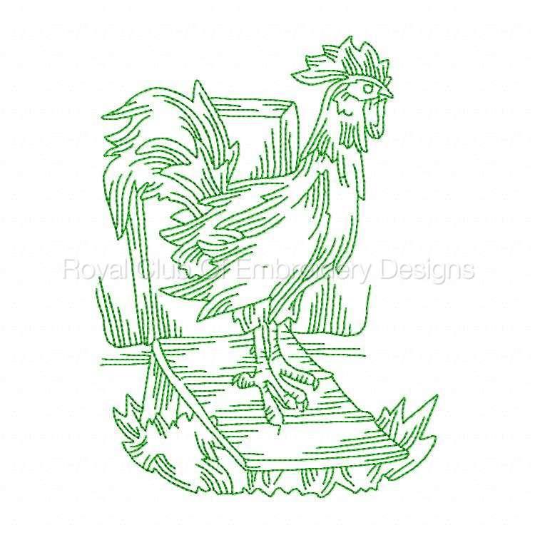 rooster_09.jpg