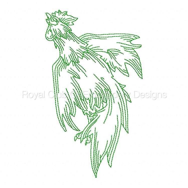 rooster_11.jpg